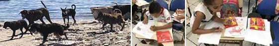 Figura 1. Ação de extensão Matilhas: Cor e desenho – Amavila/ UFRJ e uma matilha de cães da Ilha do Fundão /UFRJ. Fonte: Acervo dos projetos de Extensão Mar de história e A.R.T.E.2